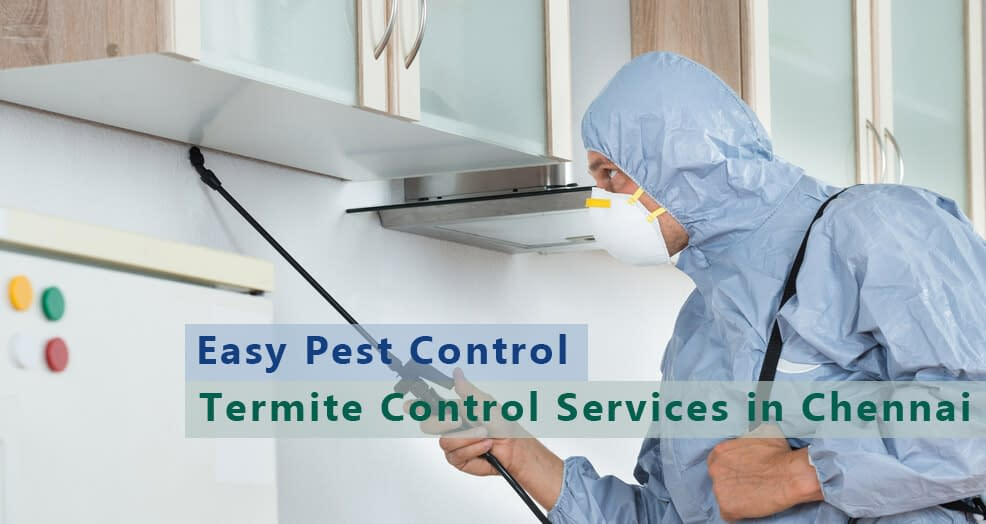 termite-control-in-chennai
